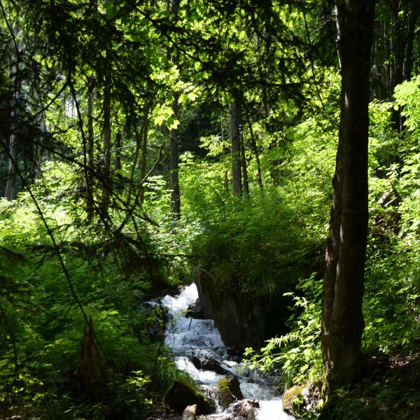Naturbestattung Waldbestattung Baumbestattung