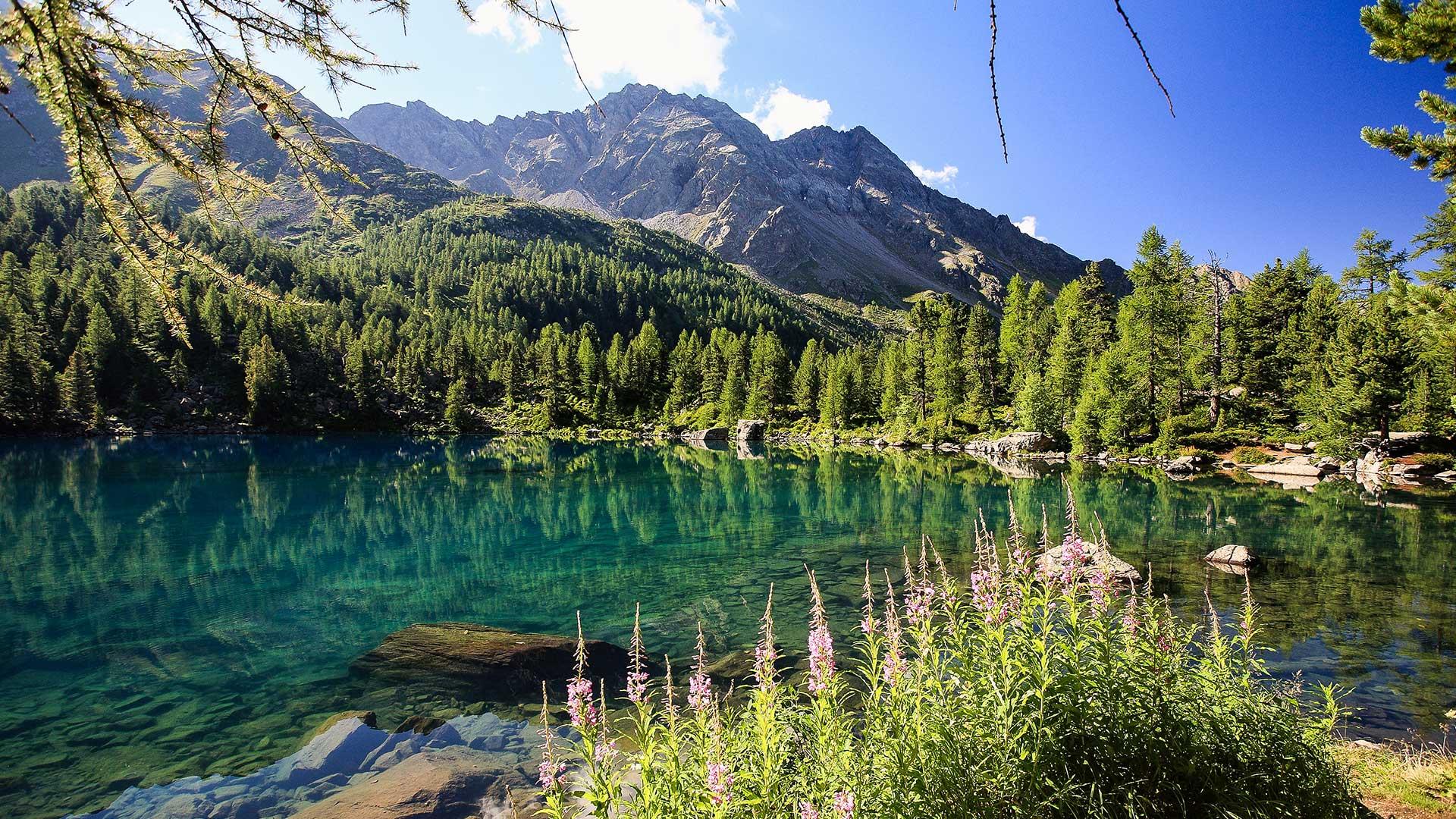 Naturbestattung; dauerhafte Begräbnisstätte für Ihren lieben Verstorbenen in den Schweizer Alpen